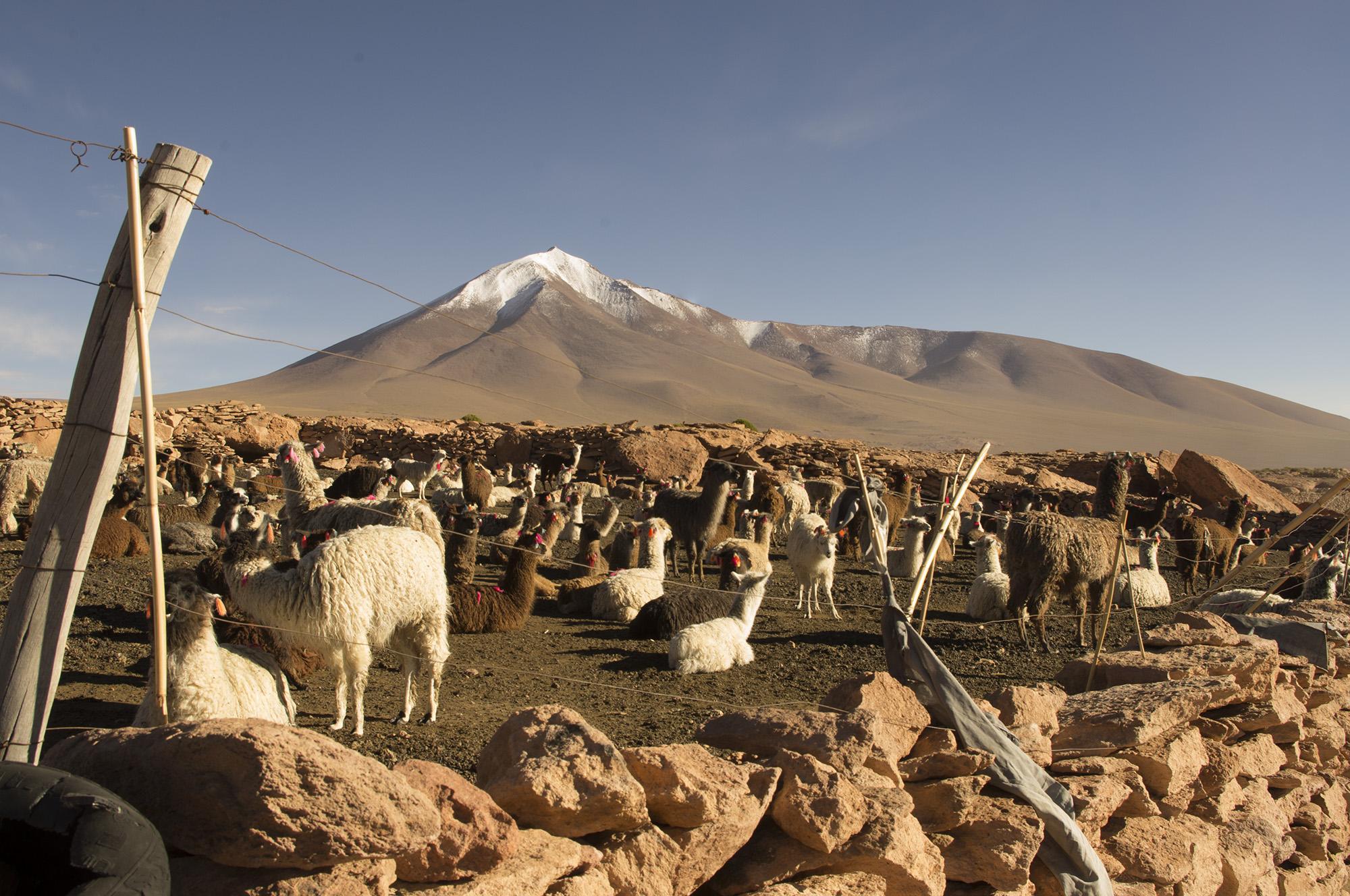 Bolivian Landscapes 5
